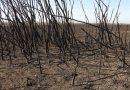 Declaran la emergencia ambiental en la zona del Delta del Río Paraná.